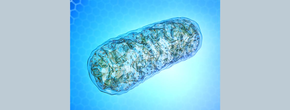 活性氧在腫瘤微環境中的狠角色!