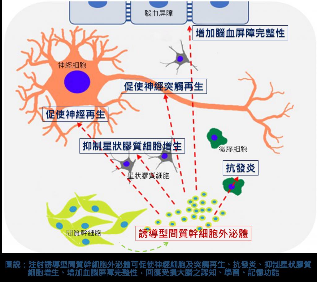 注射 幹細胞