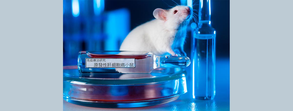 藉「睡美人跳躍子」建立肝癌免疫療法研究利器小鼠