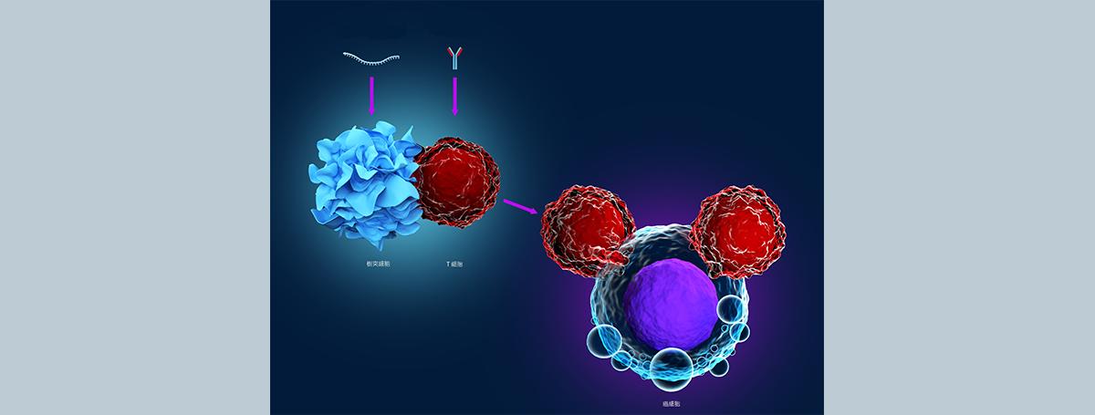 危機就是轉機!細菌逃脫機制啟發了增強癌症免疫治療的設計