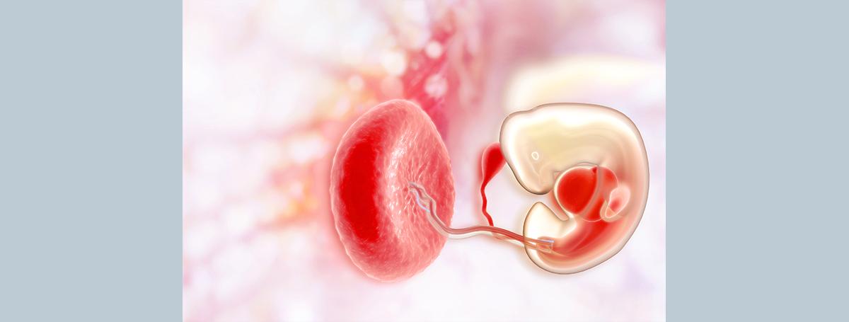 胎盤間質幹細胞解決媽媽與胎兒的免疫矛盾?