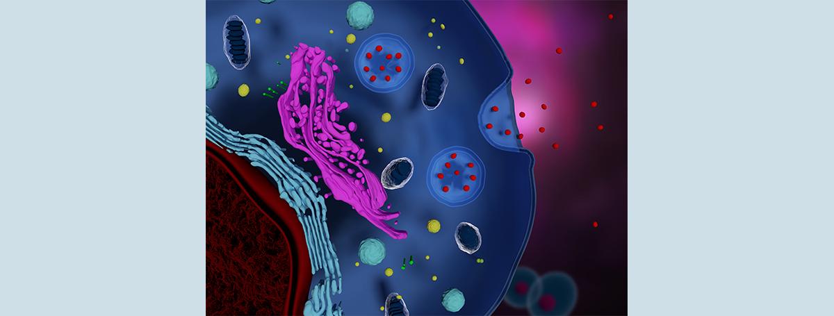 以細胞內「粒線體」窺探「腫瘤微環境」!